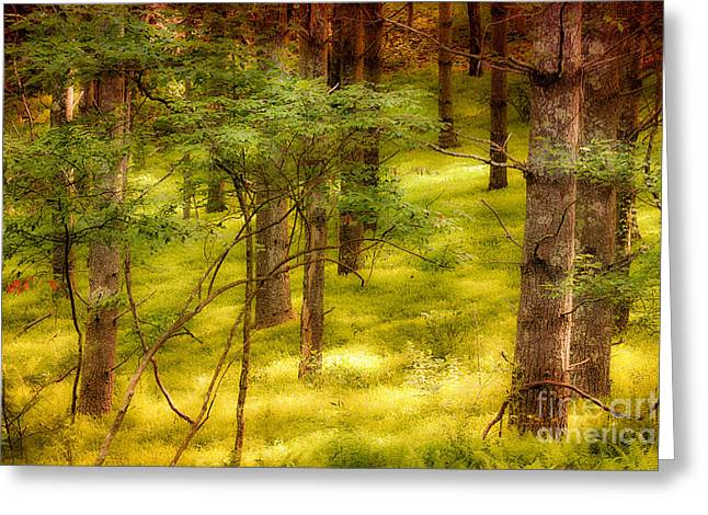 Abstract Mountains Framed Prints Greeting Cards - Velvet Forest - Blue Ridge Parkway Greeting Card by Dan Carmichael