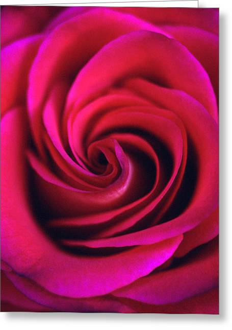 Flowers Framed Prints Greeting Cards - Velvet Rose Greeting Card by Kathy Yates