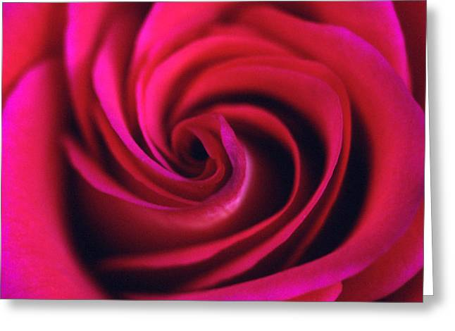Velvet Rose Greeting Card by Kathy Yates