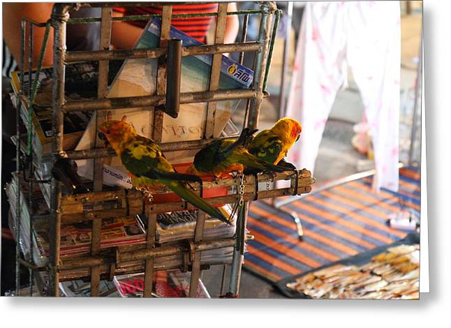 Market Greeting Cards - Vendors - Night Street Market - Chiang Mai Thailand - 011337 Greeting Card by DC Photographer