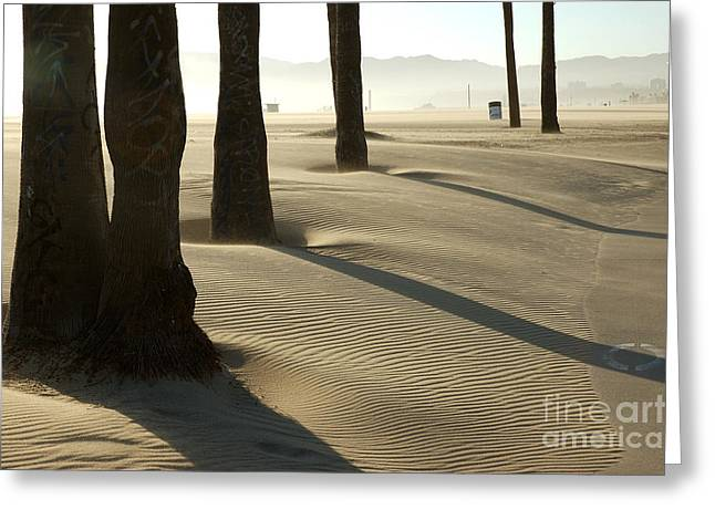 Venice Beach Palms Greeting Cards - Venice Beach 2 Greeting Card by Micah May