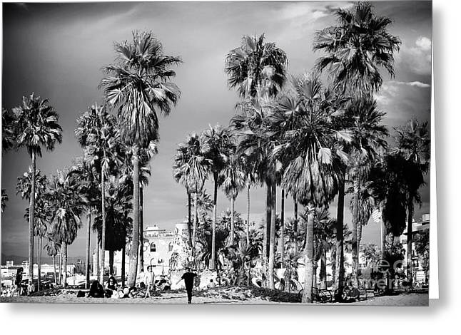 Venice Beach Palms Greeting Card by John Rizzuto