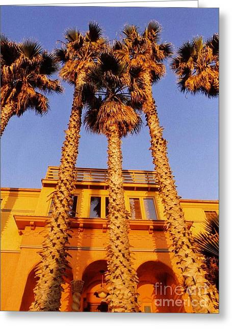 Sunset Posters Greeting Cards - Venice Plams at Sunset Greeting Card by John Malone
