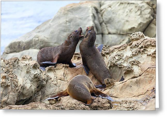 Sea Lions Greeting Cards - Verbal abuse Greeting Card by Alexey Stiop