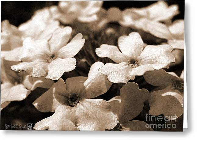 Jem Fine Arts Greeting Cards - Verbena named White Hail Greeting Card by J McCombie