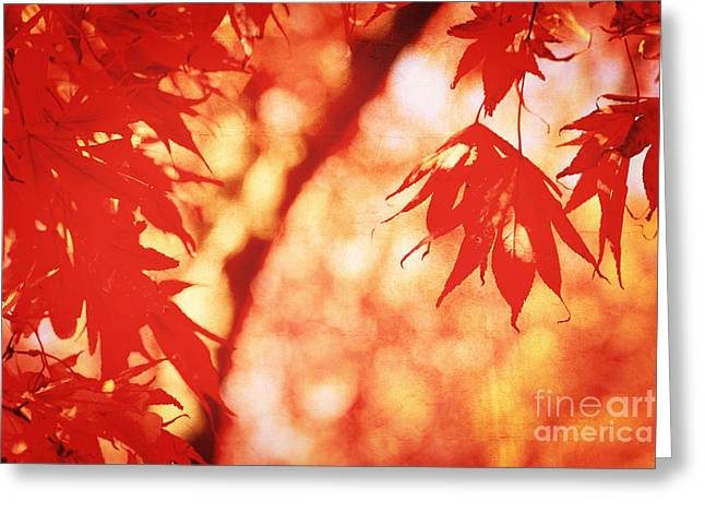 Vermillion Maple Leaves With Vintage Touch Greeting Card by Beverly Claire Kaiya