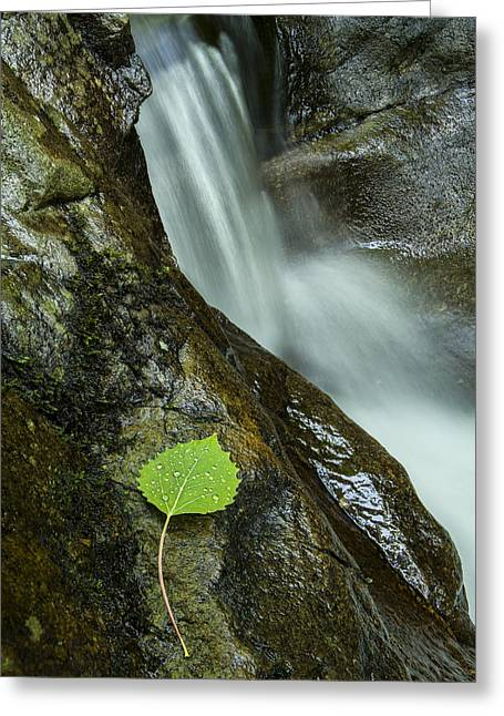 Vermont Photographs Greeting Cards - Vermont Aspen leaf waterfall Camels Hump Duxbury Greeting Card by Andy Gimino