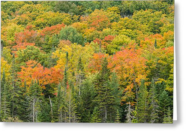 Vermont Autumn Fall Panorama Forest Foliage Greeting Card by Andy Gimino