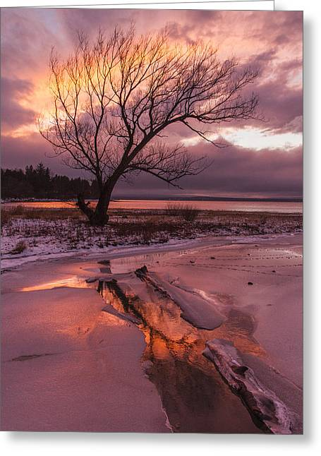 Winter- Charlotte Vt- Sunset-tree-silhouette  Greeting Card by Andy Gimino