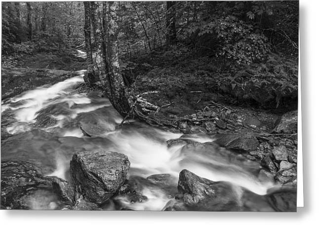 White River Scene Photographs Greeting Cards - Vermont forest foliage black and white waterfall Greeting Card by Andy Gimino