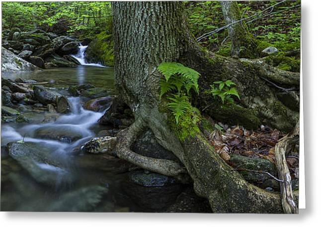 Tree Roots Greeting Cards - Vermont landscape brook stream forest waterfall Greeting Card by Andy Gimino