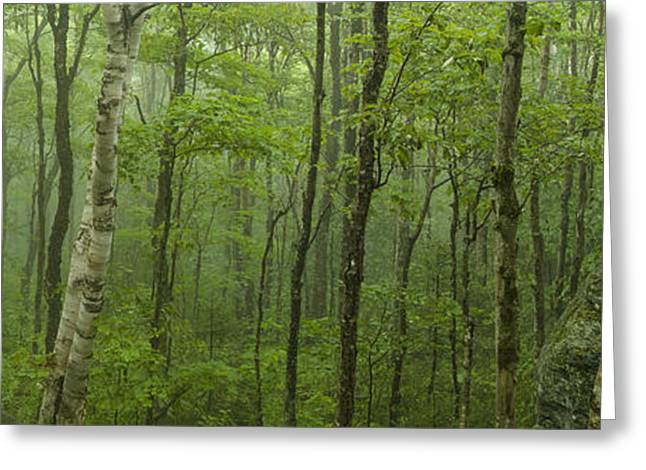 Nature Scene Greeting Cards - Vermont Mount Mansfield Green Forest Fog Panorama Greeting Card by Andy Gimino