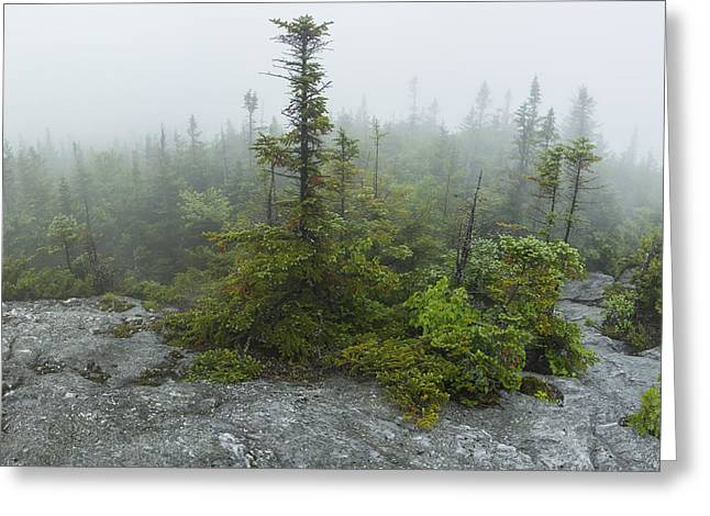 Vermont Photographs Greeting Cards - Vermont Mount Mansfield panorama forest fog trees stone Greeting Card by Andy Gimino