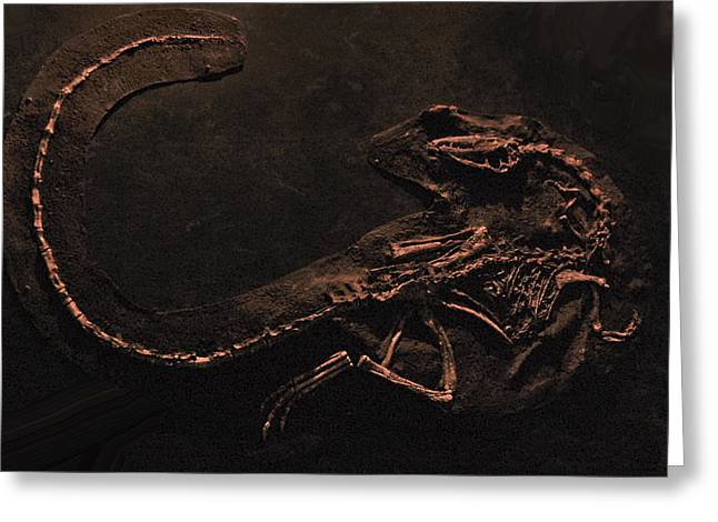 Vertebrate Greeting Cards - Vertebrate Greeting Card by Gina Dsgn