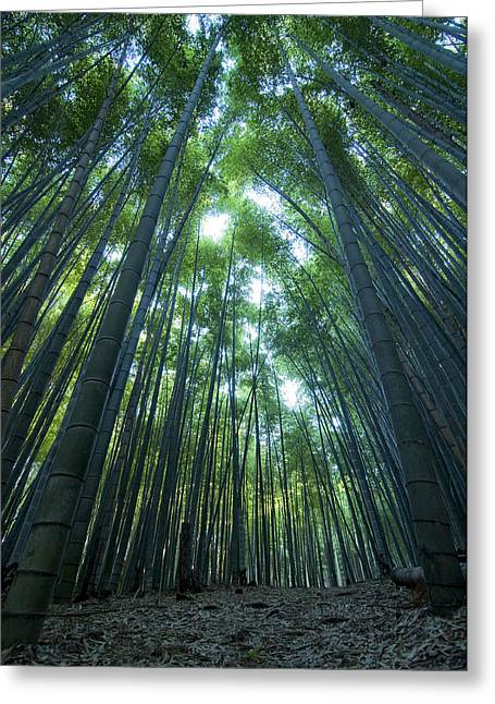 Bamboo Greeting Cards - Vertical Bamboo Forest Greeting Card by Aaron S Bedell