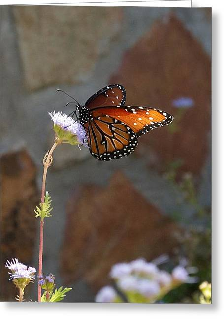 Hallmark Greeting Cards - Winery Vertical Butterfly and Flower Greeting Card by Kristina Deane