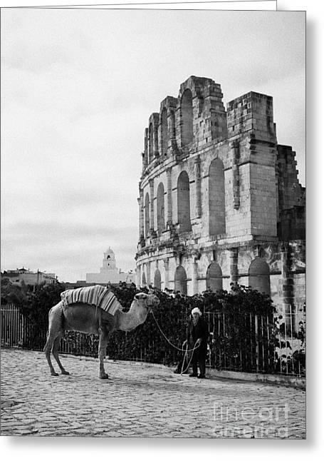 African Heritage Greeting Cards - Vertical Tourist Trap Old Man With Camel On Approach To The Old Colloseum From Tourist Car Park El Jem Tunisia Greeting Card by Joe Fox