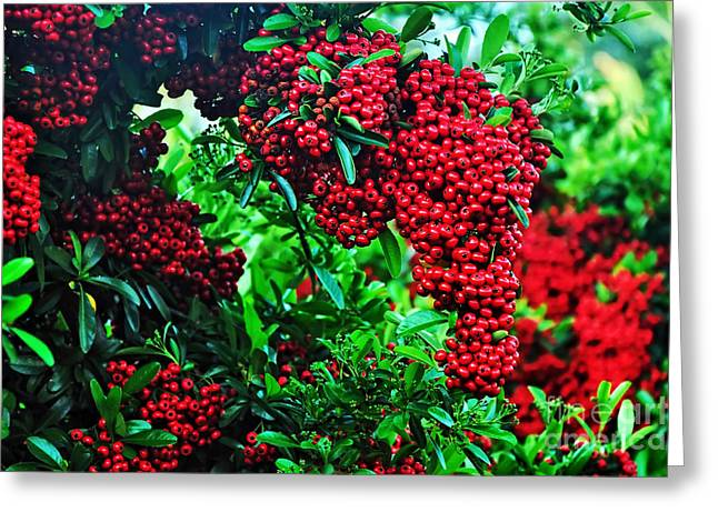 Fresh Green Greeting Cards - Very Berry Greeting Card by Kaye Menner