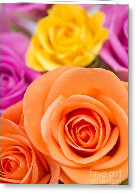 Close Focus Floral Greeting Cards - Very Bold Bunch Greeting Card by Anne Gilbert
