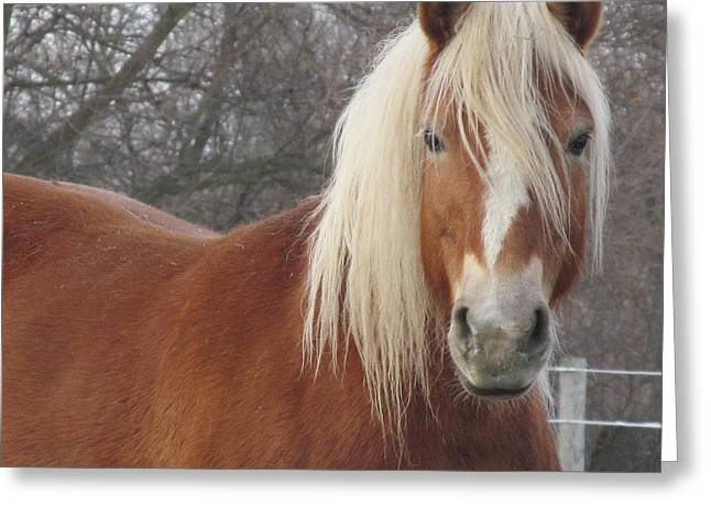Quarter Horses Greeting Cards - Very Ready for Close up Greeting Card by Tina M Wenger