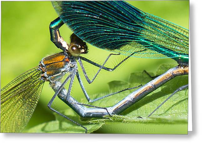 Demoiselles Greeting Cards - Very Supportive Greeting Card by Steven Poulton