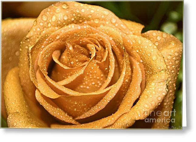 Very Wet Rose Greeting Card by Debbie Portwood