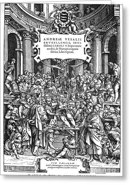 1555 Greeting Cards - Vesalius Teaching Anatomy Greeting Card by Granger