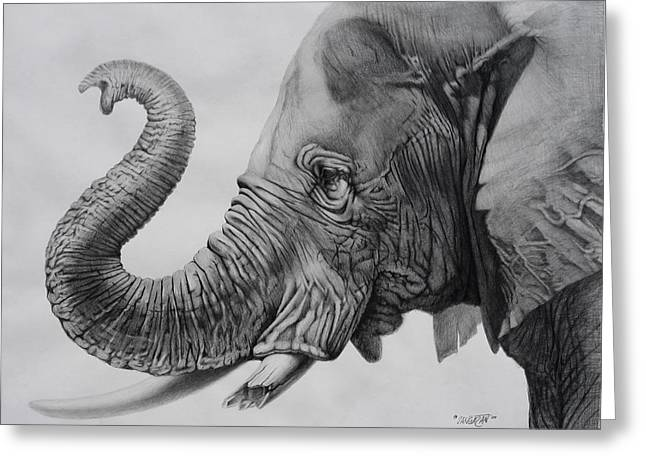 Graphite Art Drawings Greeting Cards - Veteran Greeting Card by Tim Dangaran