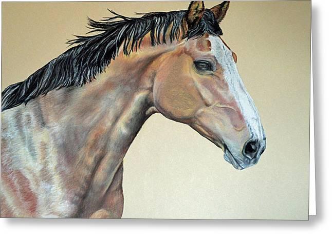 Veterinarian's Warm Blood Horse Greeting Card by Ann Marie Chaffin