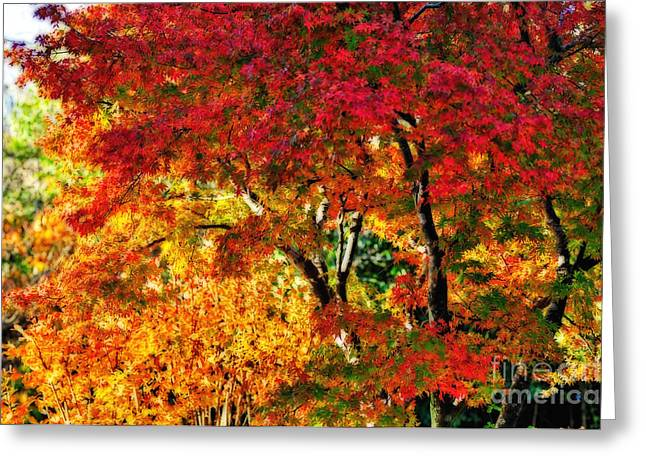Reds Of Autumn Digital Greeting Cards - Vibrance of Autumn Greeting Card by Kaye Menner