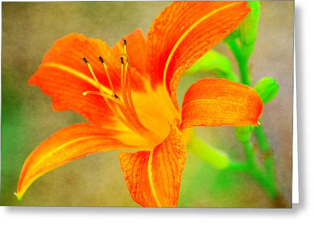 Day Lilly Greeting Cards - Vibrant Daylily Greeting Card by Deena Stoddard