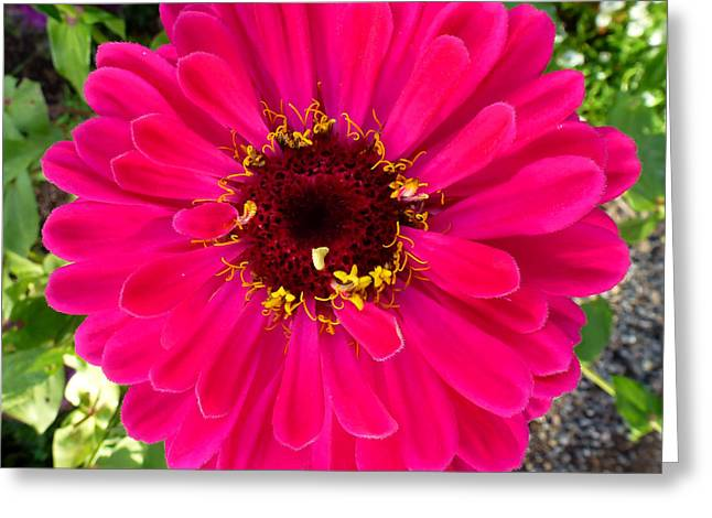 Sonoma Pyrography Greeting Cards - Vibrant Flower - California Greeting Card by Fabien White