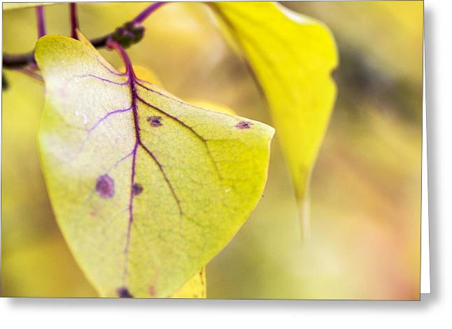 Vibrant Leaves Greeting Card by Dana Moyer
