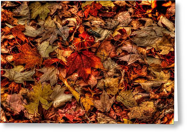 Indiana Autumn Greeting Cards - Vibrant Leaves Greeting Card by Sharon Meyer
