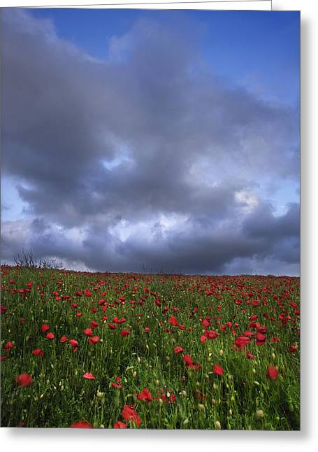 Pollenation Greeting Cards - Vibrant poppy fields under moody dramatic sky Greeting Card by Matthew Gibson