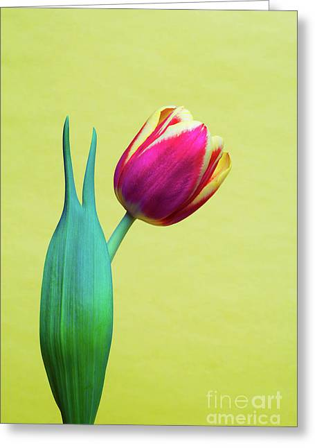 Linda Matlow Greeting Cards - Vibrant Tulip Peace Sign   Greeting Card by Linda Matlow