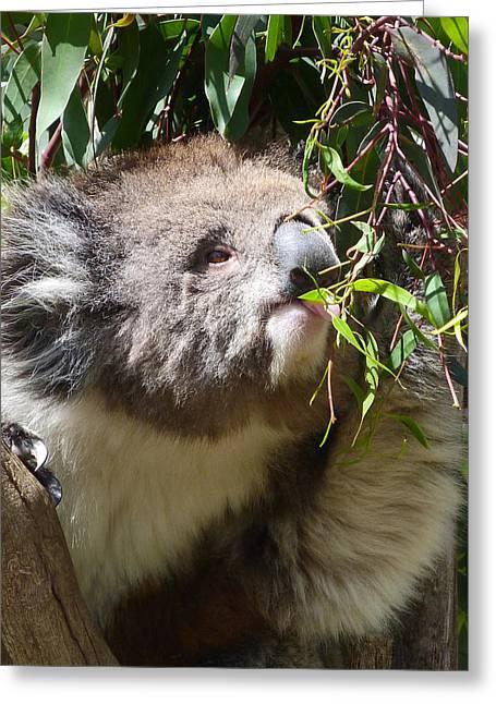 Victorian Koala Snacktime Greeting Card by Margaret Saheed