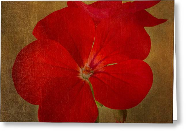 Red Geraniums Greeting Cards - Victorian Red Greeting Card by Marina Kojukhova