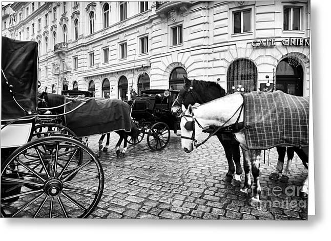 Old Vienna Greeting Cards - Vienna Horses Greeting Card by John Rizzuto