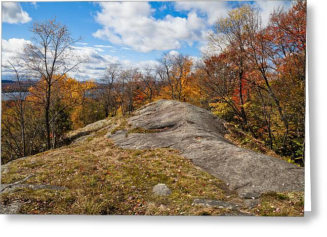 Fir Trees Greeting Cards - View from Eagle Cliff - Eagle Bay NY Greeting Card by David Patterson
