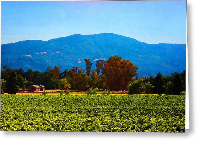 Grapevines Greeting Cards - View from Mumm Napa Greeting Card by Timothy Bulone