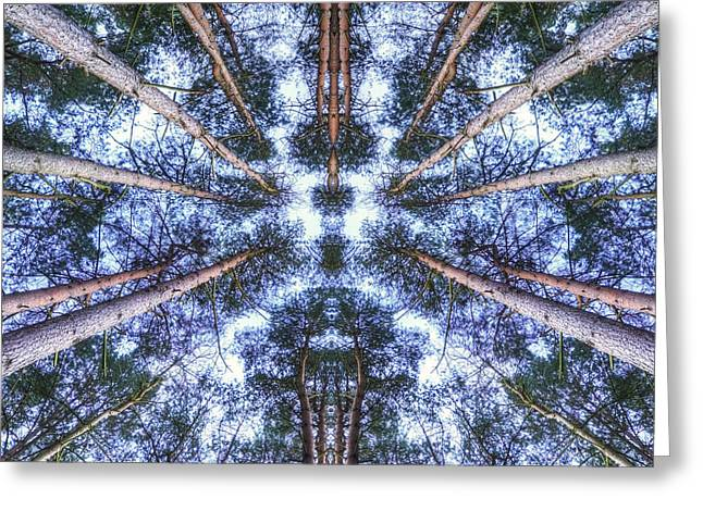 Height Greeting Cards - View looking up to sky through symmetrical pine trees canopy Greeting Card by Matthew Gibson