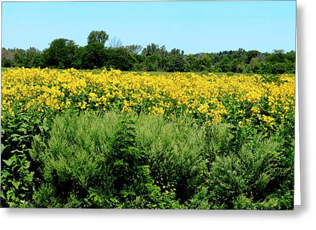 View Of A Field, Abshire Prairie Greeting Card by Panoramic Images