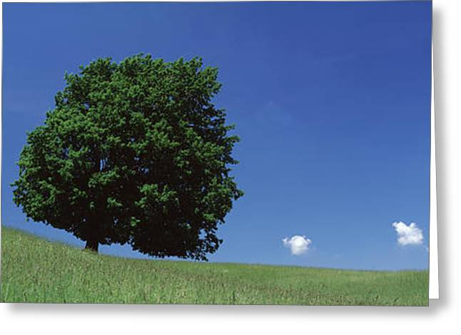 One Object Greeting Cards - View Of A Lone Tree On A Hillside In Greeting Card by Panoramic Images
