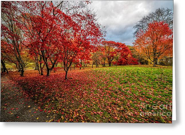 Acer Greeting Cards - View of Autumn Greeting Card by Adrian Evans