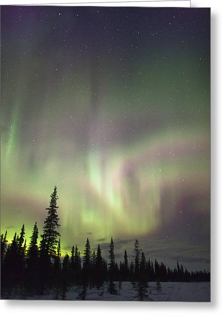 Winter Night Greeting Cards - View Of Northern Lights And Spruce Greeting Card by Kevin Smith