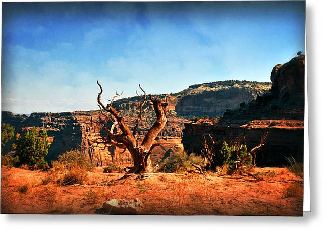 View Of The Canyon Greeting Card by Marty Koch