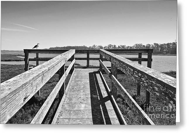 Sea Platform Greeting Cards - View of the Elkhorn Slough from a platform.  Greeting Card by Jamie Pham