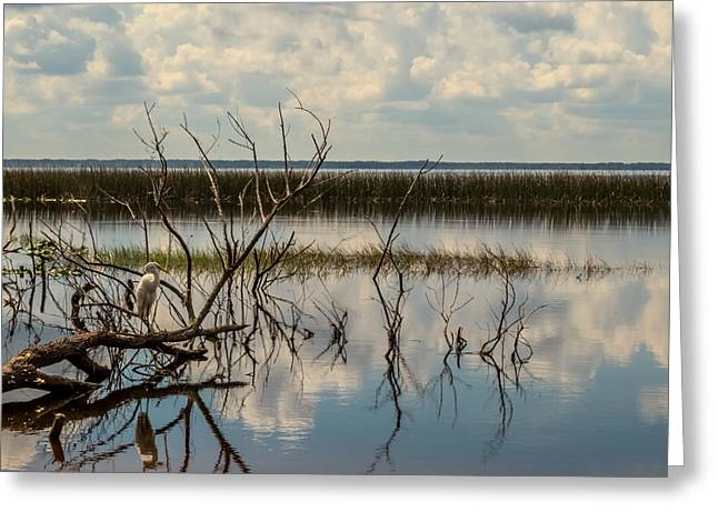 Egret Greeting Cards - View of the lake Greeting Card by Zina Stromberg