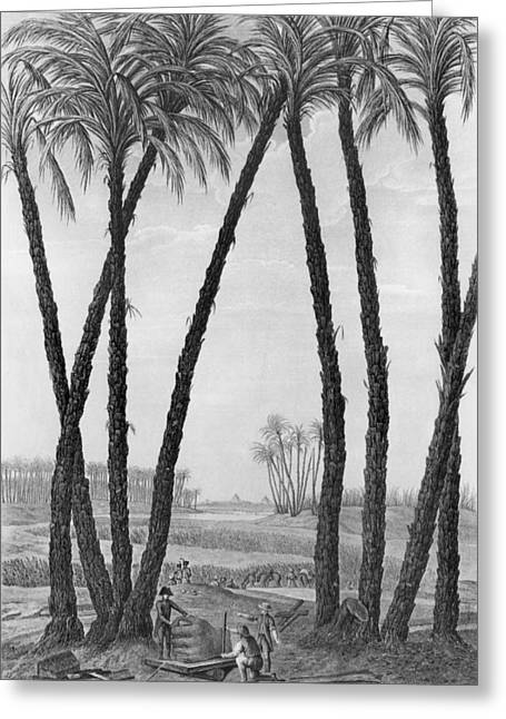 Pyramids Greeting Cards - View of the ruins of Memphis seen from the south east Greeting Card by Jean Louis Delignon